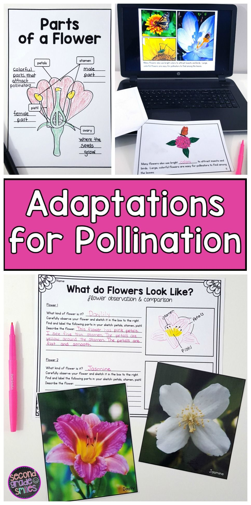 Parts Of A Flower Plant Adaptations For Pollination Plant Adaptations Pollination Parts Of A Flower