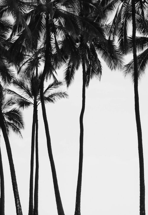 Eminem black and white photo photography of palm trees from a tropical tropics island hawaii florida la cali california silhouette