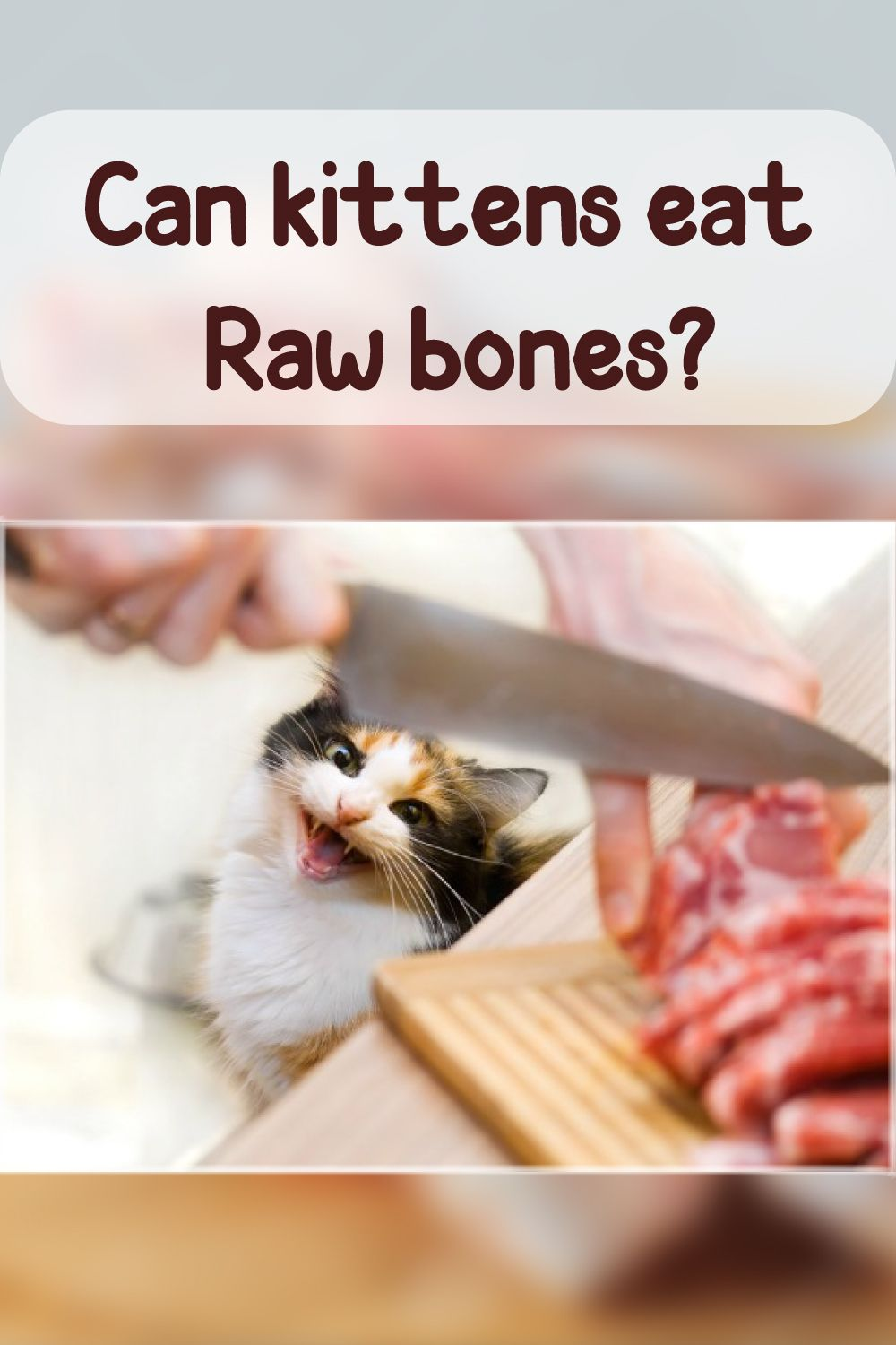 Can Kittens Eat Raw Bones In 2020 Kitten Food Best Cat Food Eating Raw Chicken