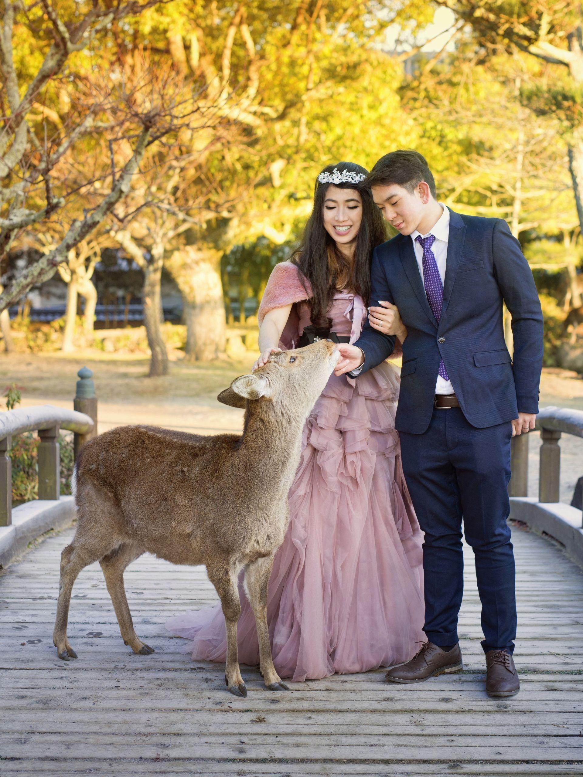 Deer's park, Nara, Japan japan nara weddingjapan