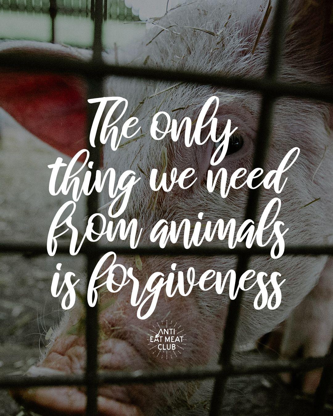 10+ Anti animal cruelty club ideas