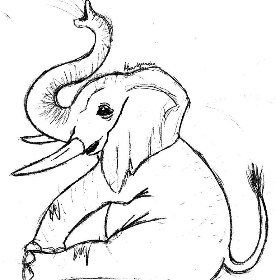 cute elephant drawing baby elephant coloring pages