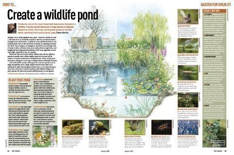 How to build a wildlife pond wildlife gardening for Design wildlife pond