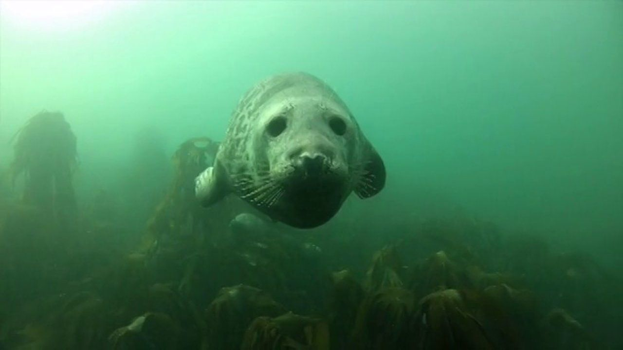 Seal of Approval. Come and join me and the gang as we get the seal of approval as we visit the Farne Islands in Northumberland in October 20...