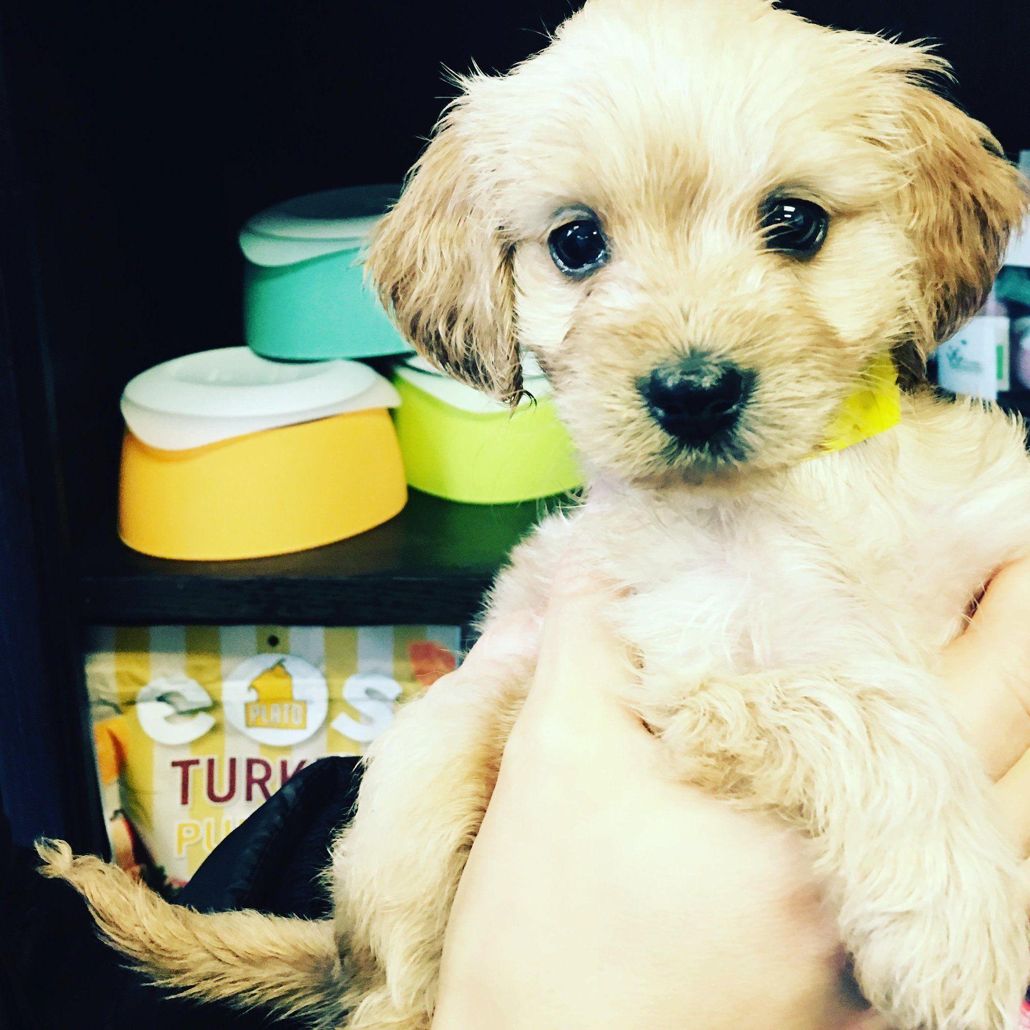 Gayweho Dogs 4 U On Twitter Dogs Cocker Spaniel Small Dogs