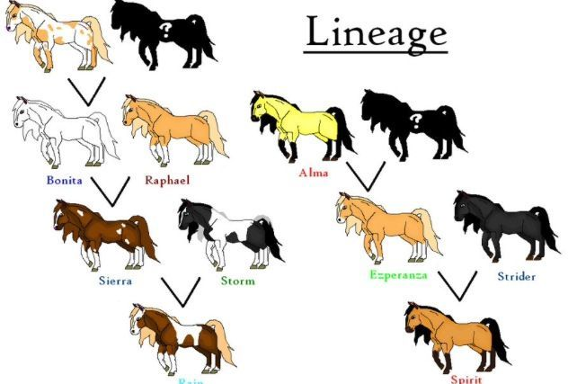 Horse family tree search