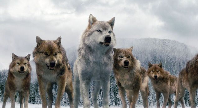 Werewolves from twilight (seth on left) (Leah in Middle ... Werewolf Twilight Jacob