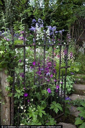 Overgrown wrought iron gate-cottage garden