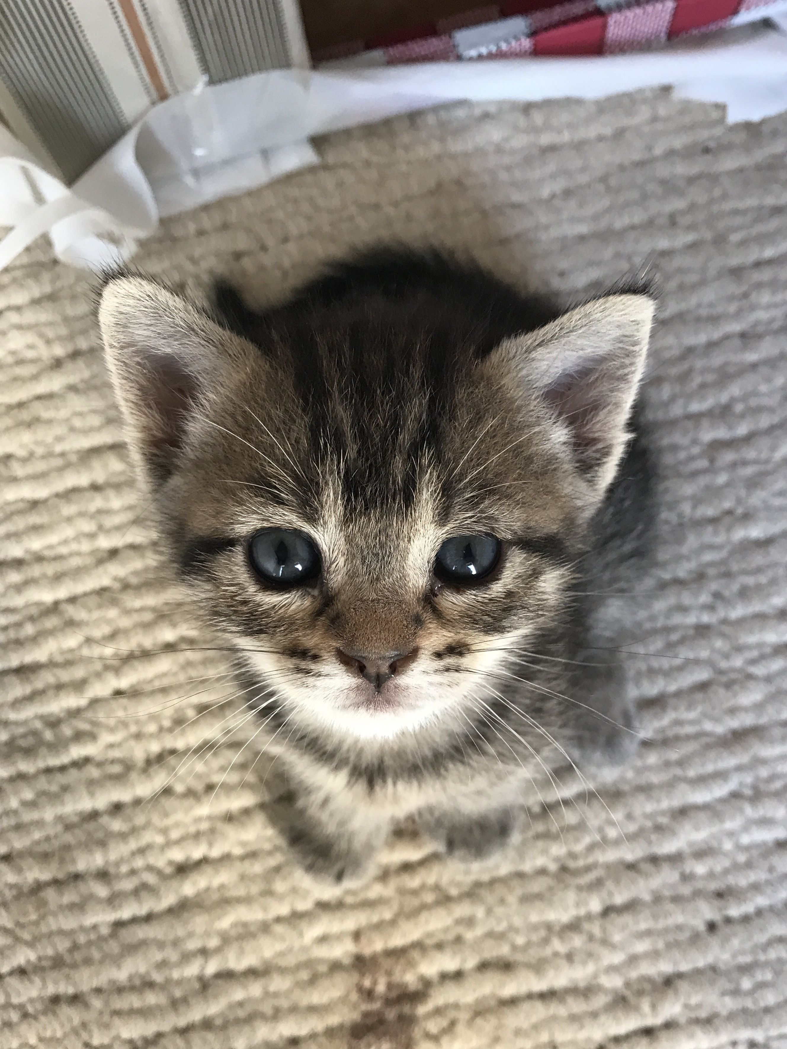 The little cutiest kitten babyanimal cuteanimal 135
