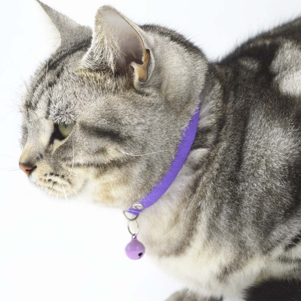 Shorven Pack Of 3 6 10 Adjustable Cat Puppy Id Collar With