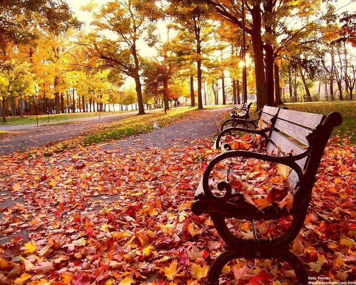 fall #bench