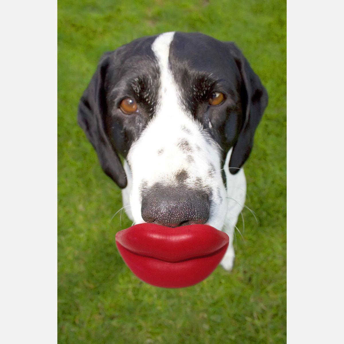 just what my lipless pooch needs     55  fab com
