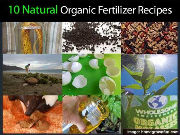10 Natural Homemade Organic Fertilizer Recipes Organic 640 x 480