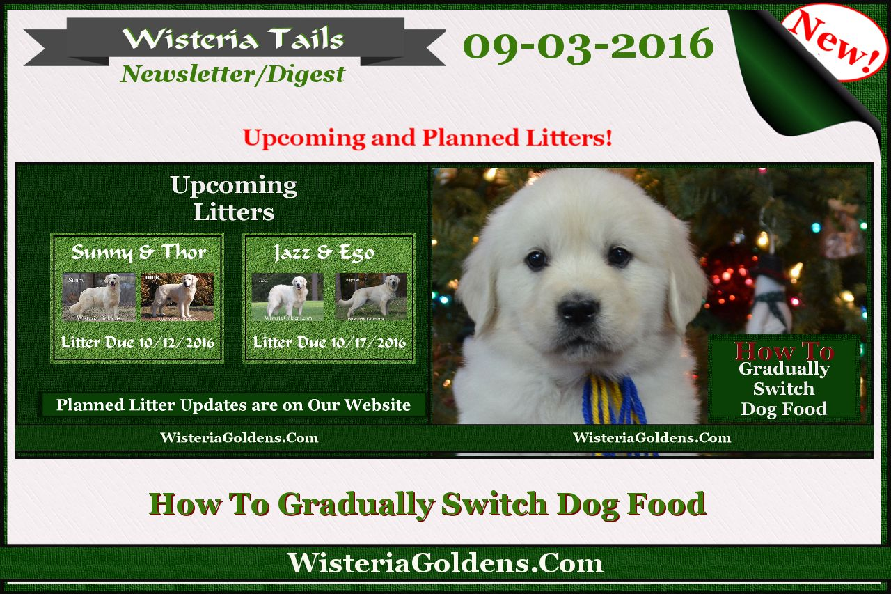Price Under 300 Buckeye Puppies Puppies Lancaster Puppies Dogs