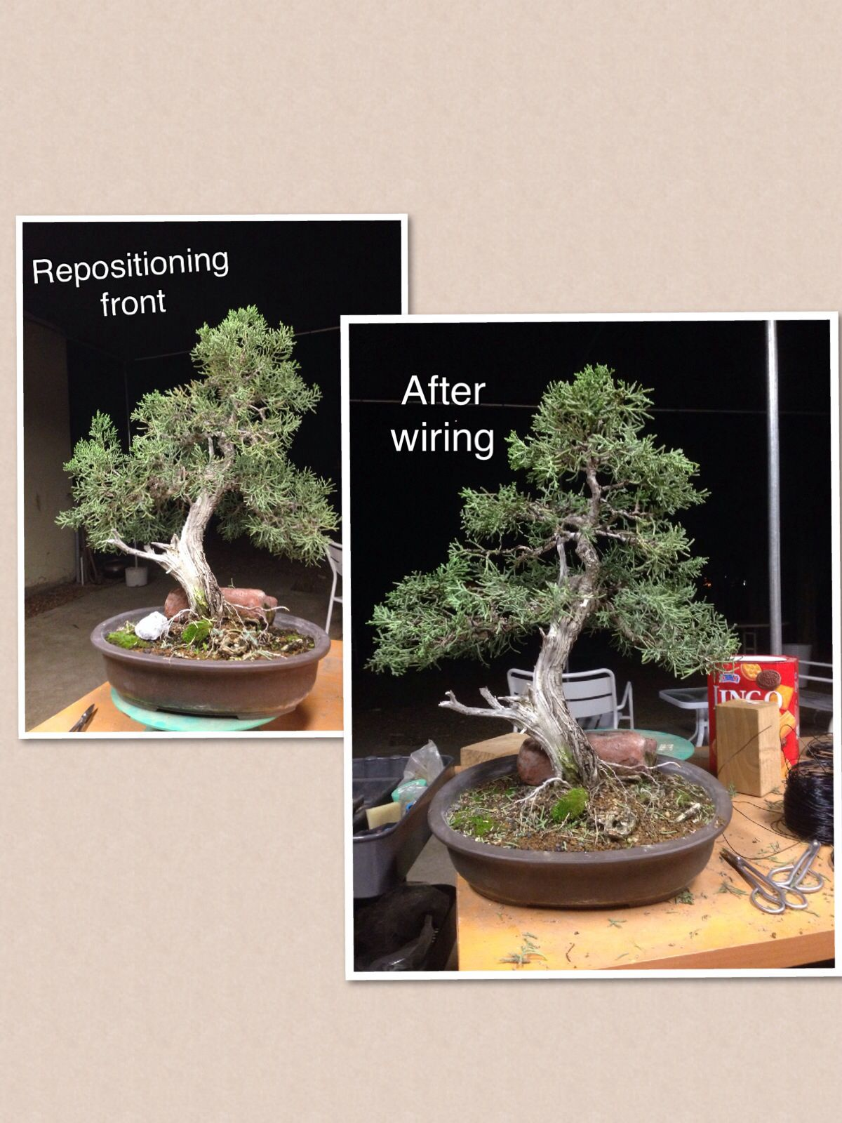California Juniper By Jason Mark Chan Next Steps Clean Up Foliage Arrange Branches And Repot Bonsai Asian Landscape Asian Flowers Zen Garden