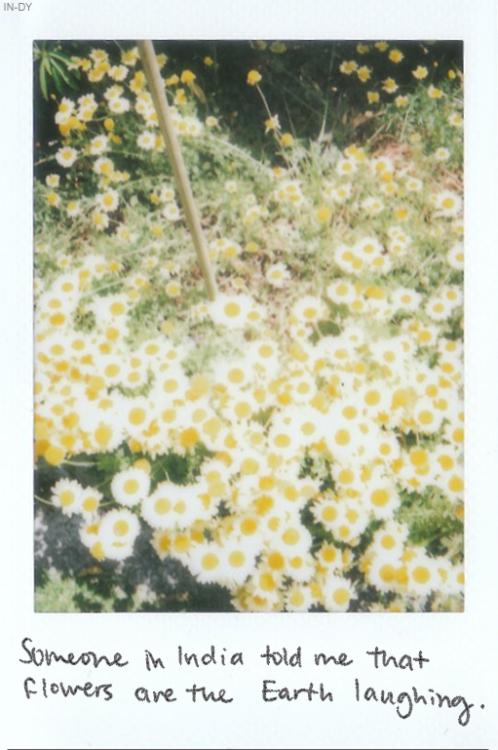 Φ♠æ ゚☚ Flowers, Nature, Words