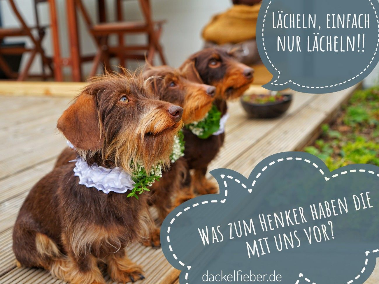 Unsere Trauzeugen Herrchen Und Frauchen Haben Ja Gesagt Dackel Langhaardackel Rauhaardackel