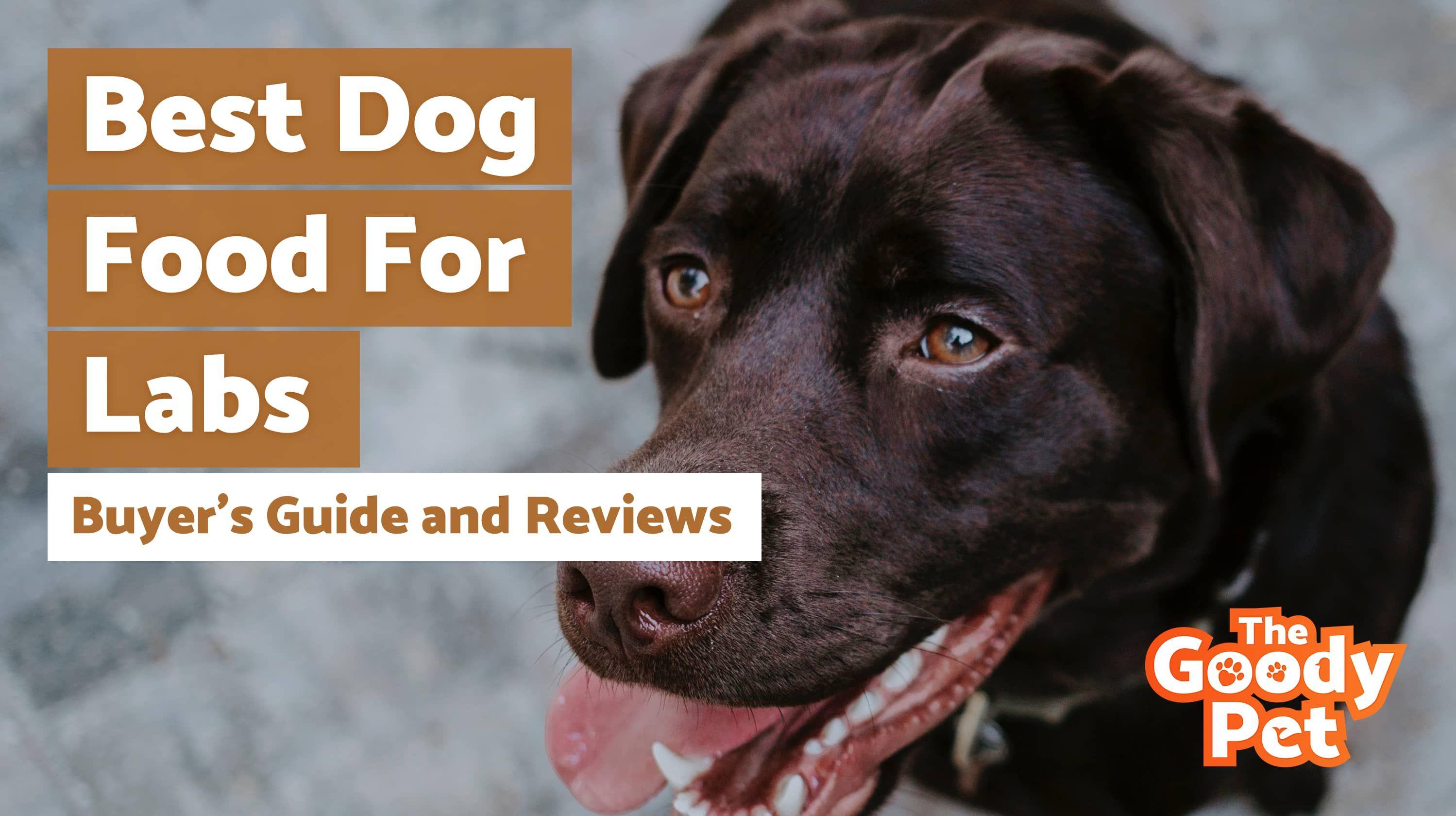 7 best dog foods for labrador retrievers june 2020