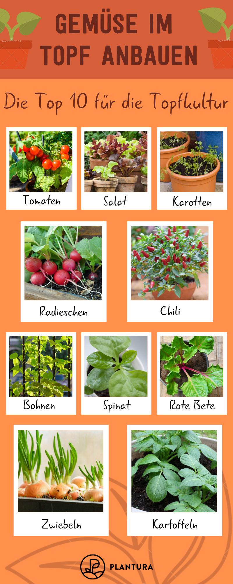 Gemüse im Topf anbauen: Die 10 besten Sorten für die Topfkultur - Plantura #gemüsepflanzen