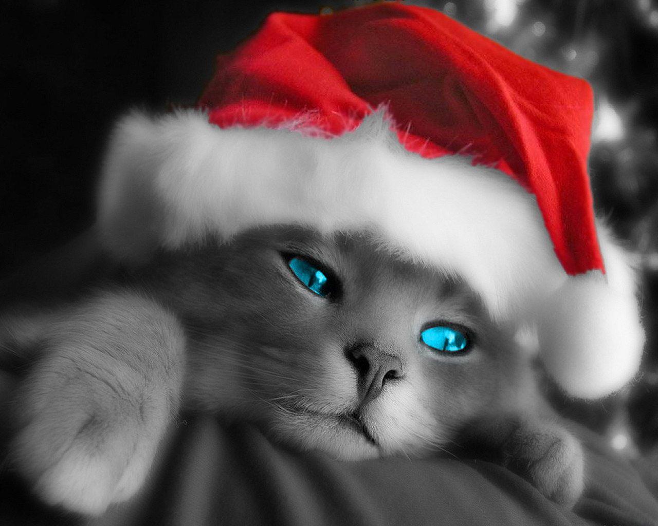 Cute Christmas Desktop Wallpaper Cute Grey Christmas Cat Hd Desktop Backgrounds Christmas Kitten Christmas Animals Kitten Wallpaper