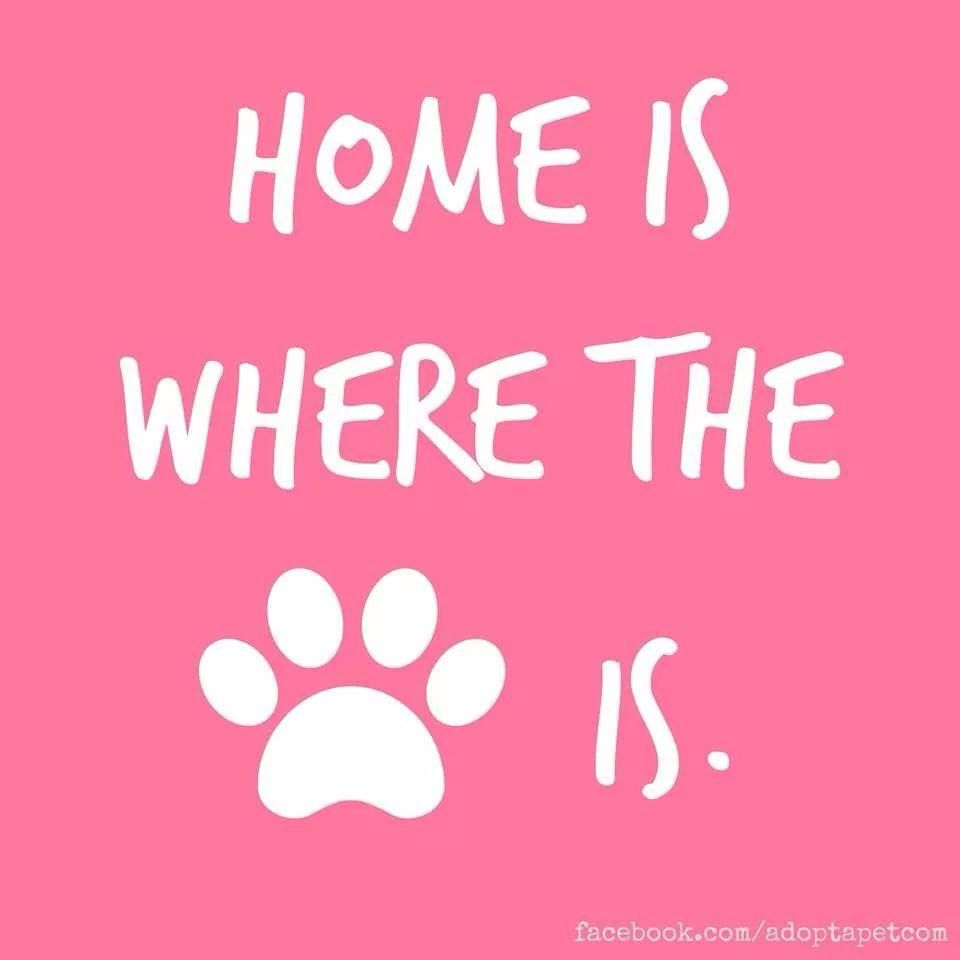 Home Is Where The Paw Is Dog Quotes Pets Puppy Love