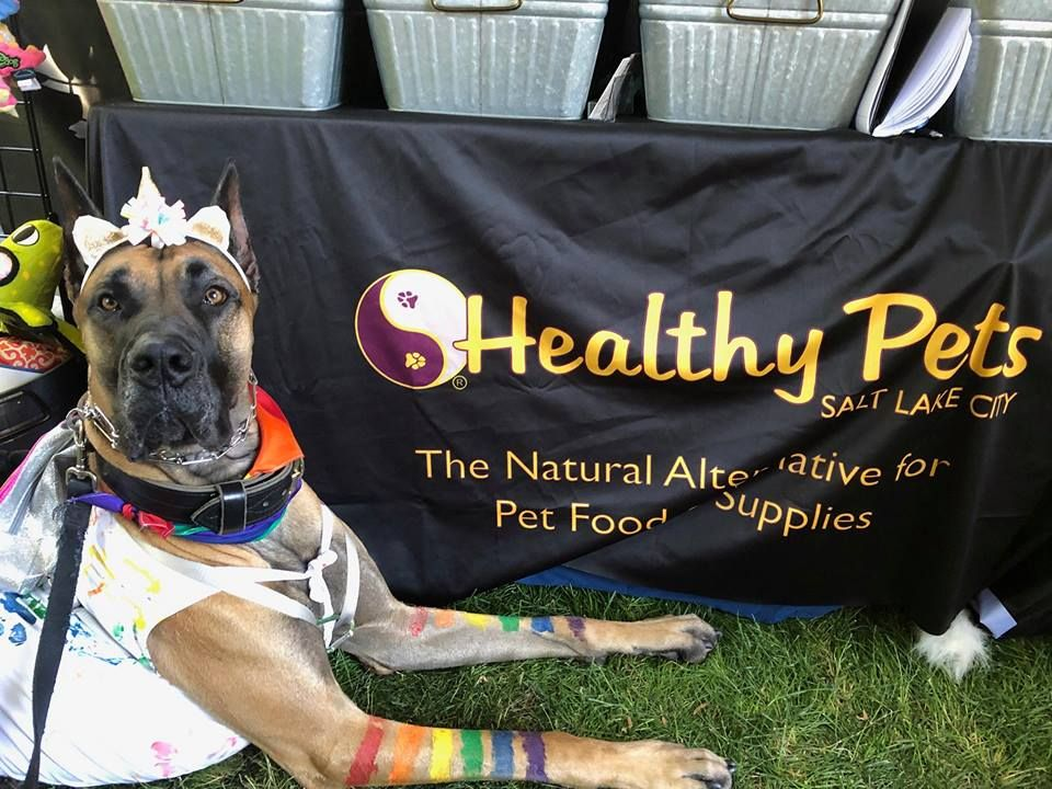 Love those rainbow stripes food animals pets lake city