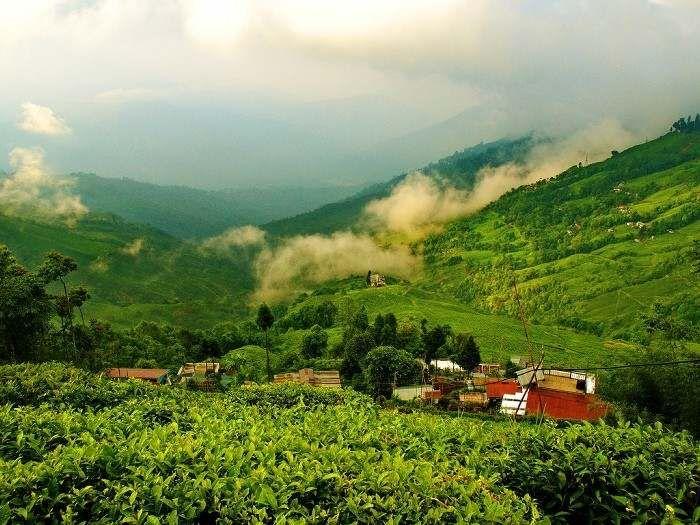 d2620b41b80022d8403c226613bd3a70 - List Of Tea Gardens In Darjeeling