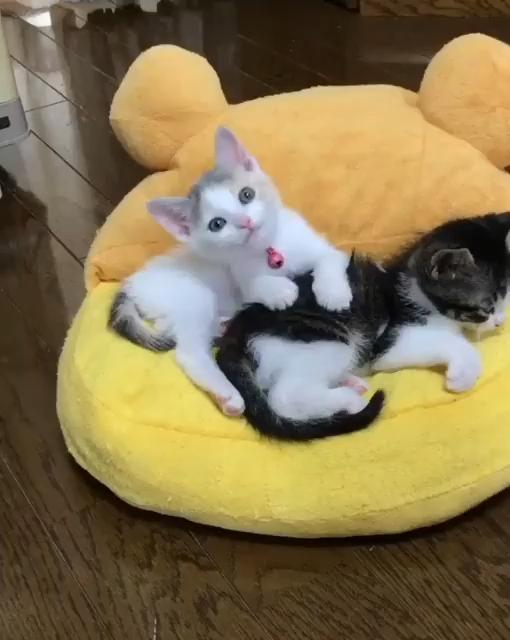 So satisfying cat video
