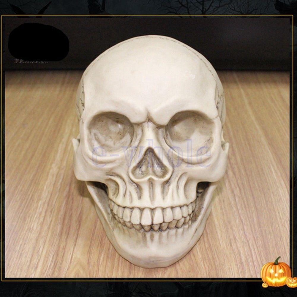 Resin Human Skull Model Anatomical Medical Teaching Skeleton Head Ornaments