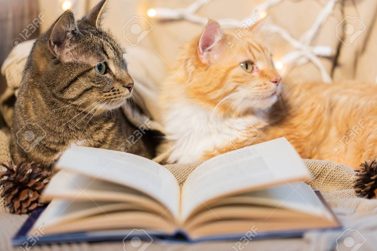two cats lying on sofa with book at home , #Sponsored, #lying, #cats, #sofa, #home, #book