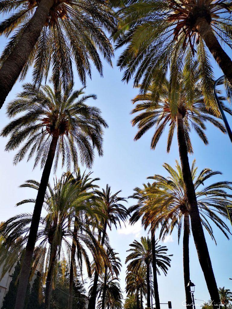 Visitar Palma De Mallorca En Dos Días Spain Vacation Spain Travel Spain Travel Guide