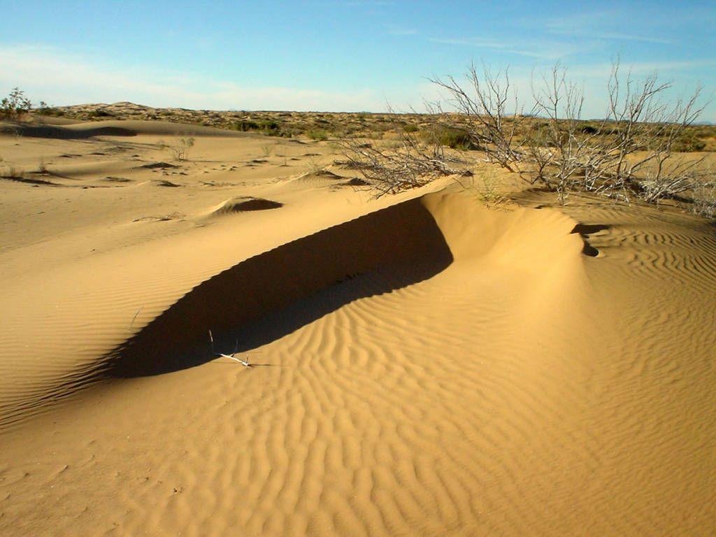 El Desierto De Sonora Mexico Desierto De Sonora
