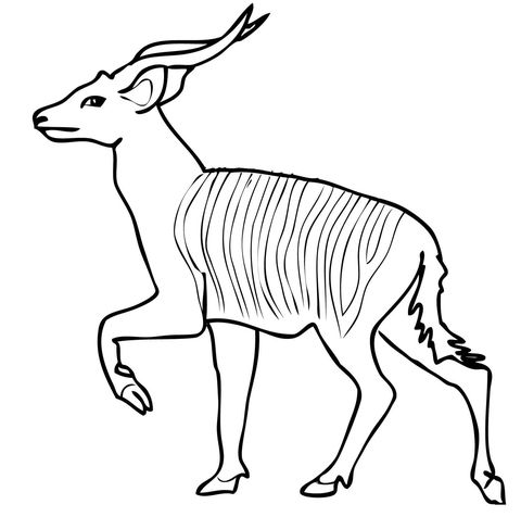 African Forest Antelope Bongo Coloring Page Free Printable