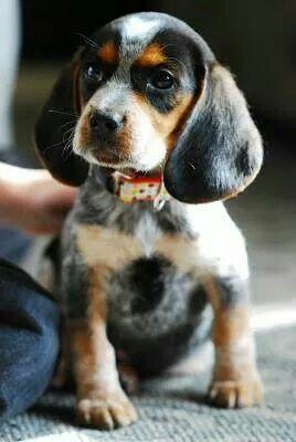 Top 10 Best Dog Destinations In Colorado Puppies Cute Animals