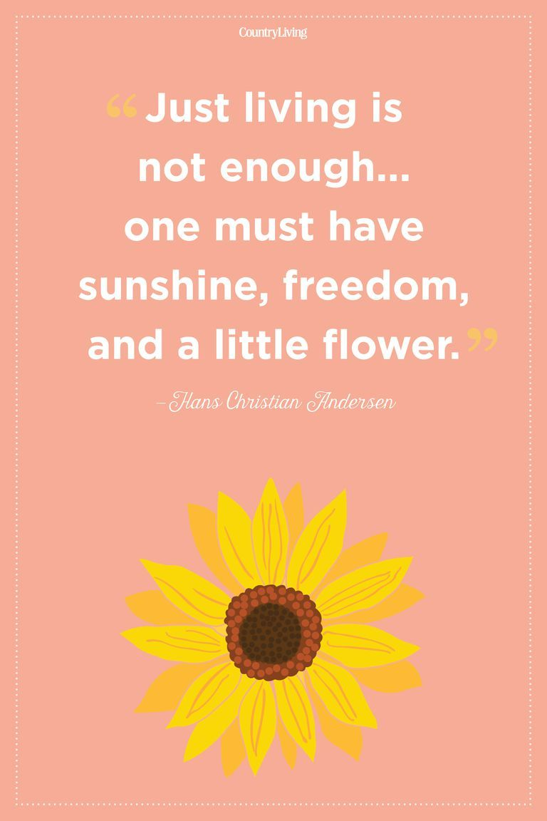 20 Flower Quotes To Inspire New Beginnings Crafts Pinterest