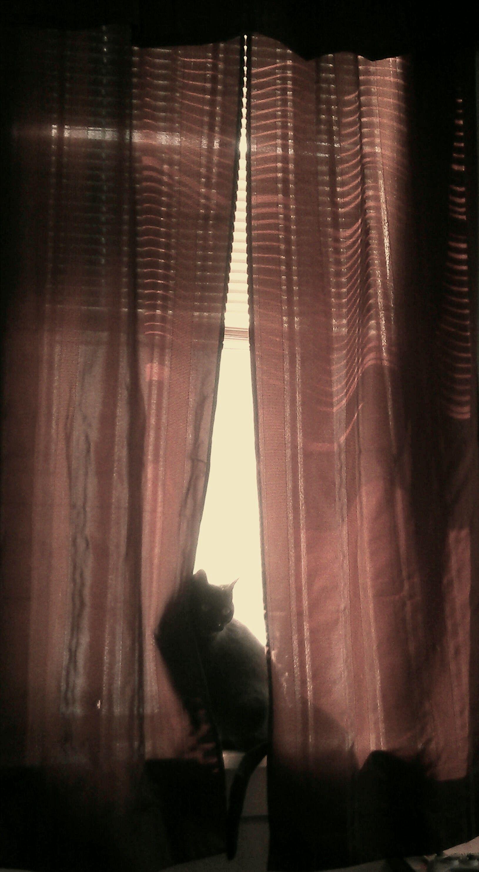 Tido in the window