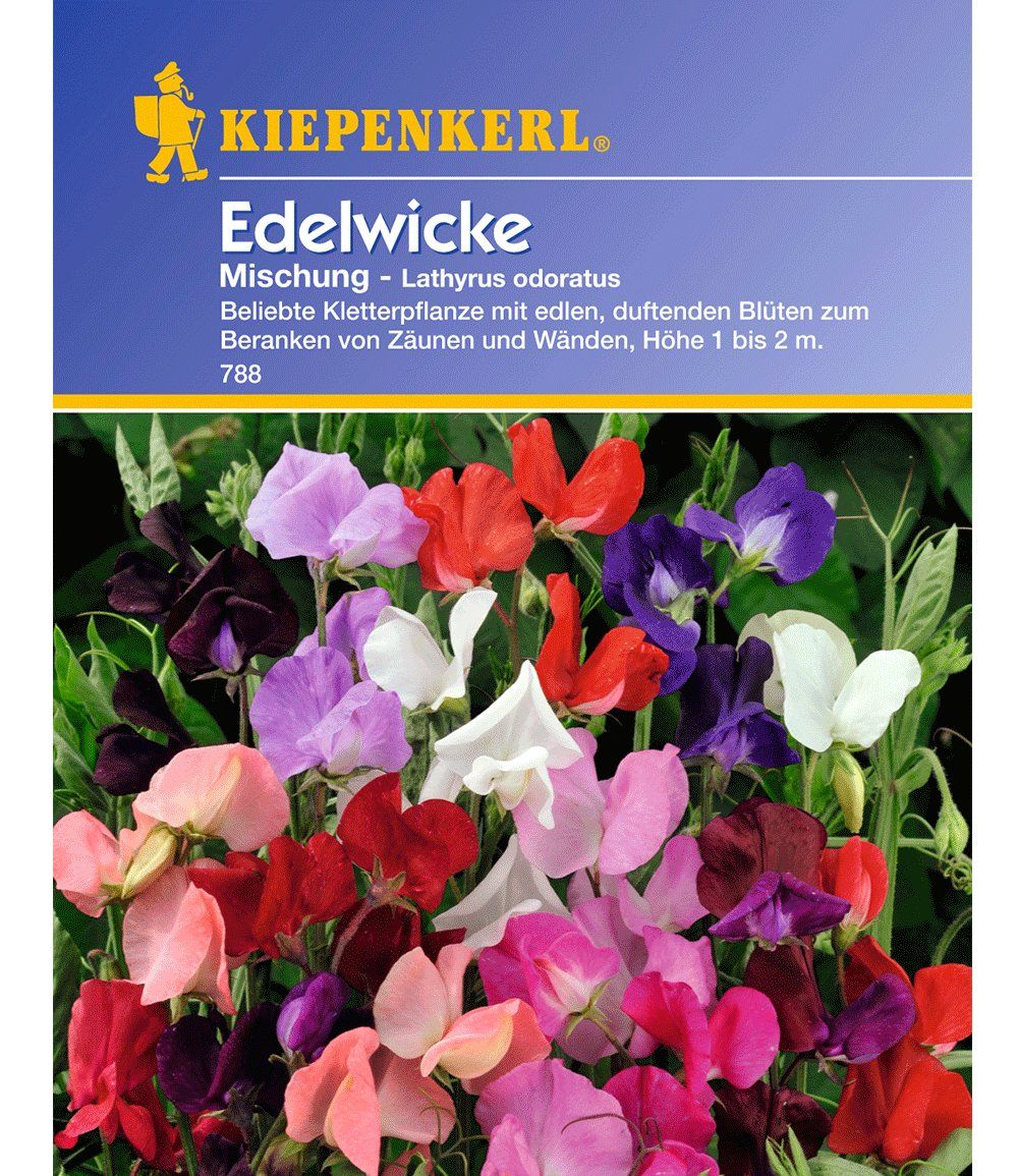 Edelwicke Mischung