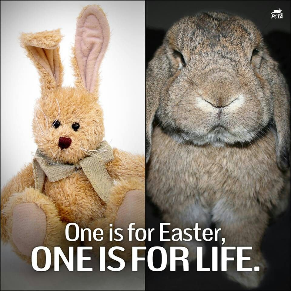 Easter bunny animals save animals rabbit facts