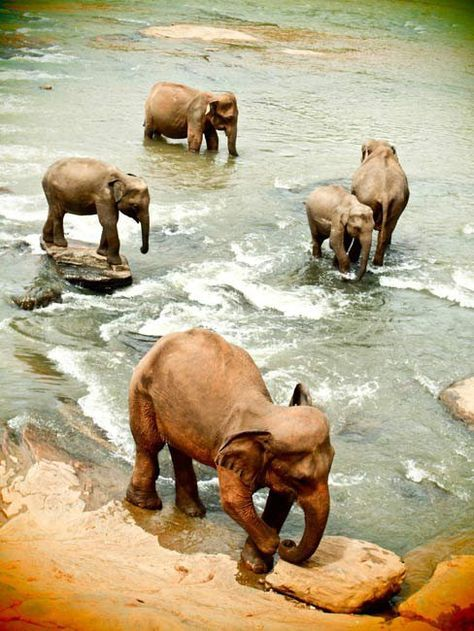 Sri Lanka. You can see beautiful wild animals in the Yala national park in the south.