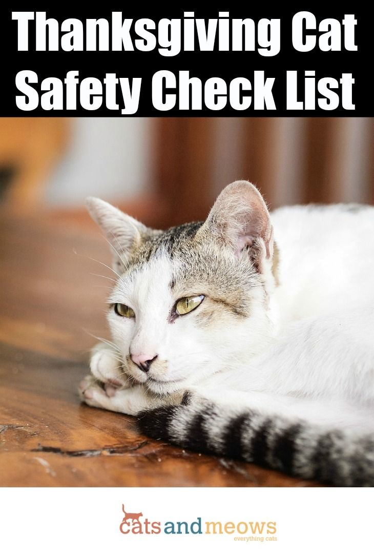 Thanksgiving Cat Safety Check List Keep Your Pets Safe During The Holidays Cat Safety Cat Training Sick Cat