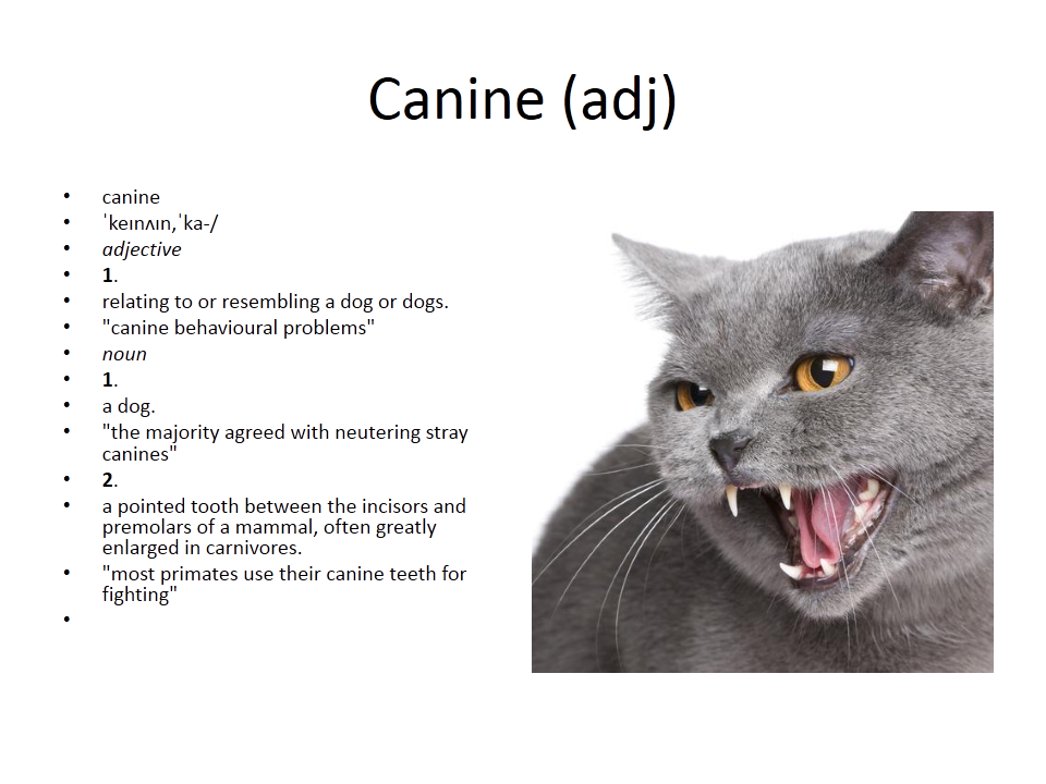 canine meaning gre cat vocabulary Canine, Vocabulary