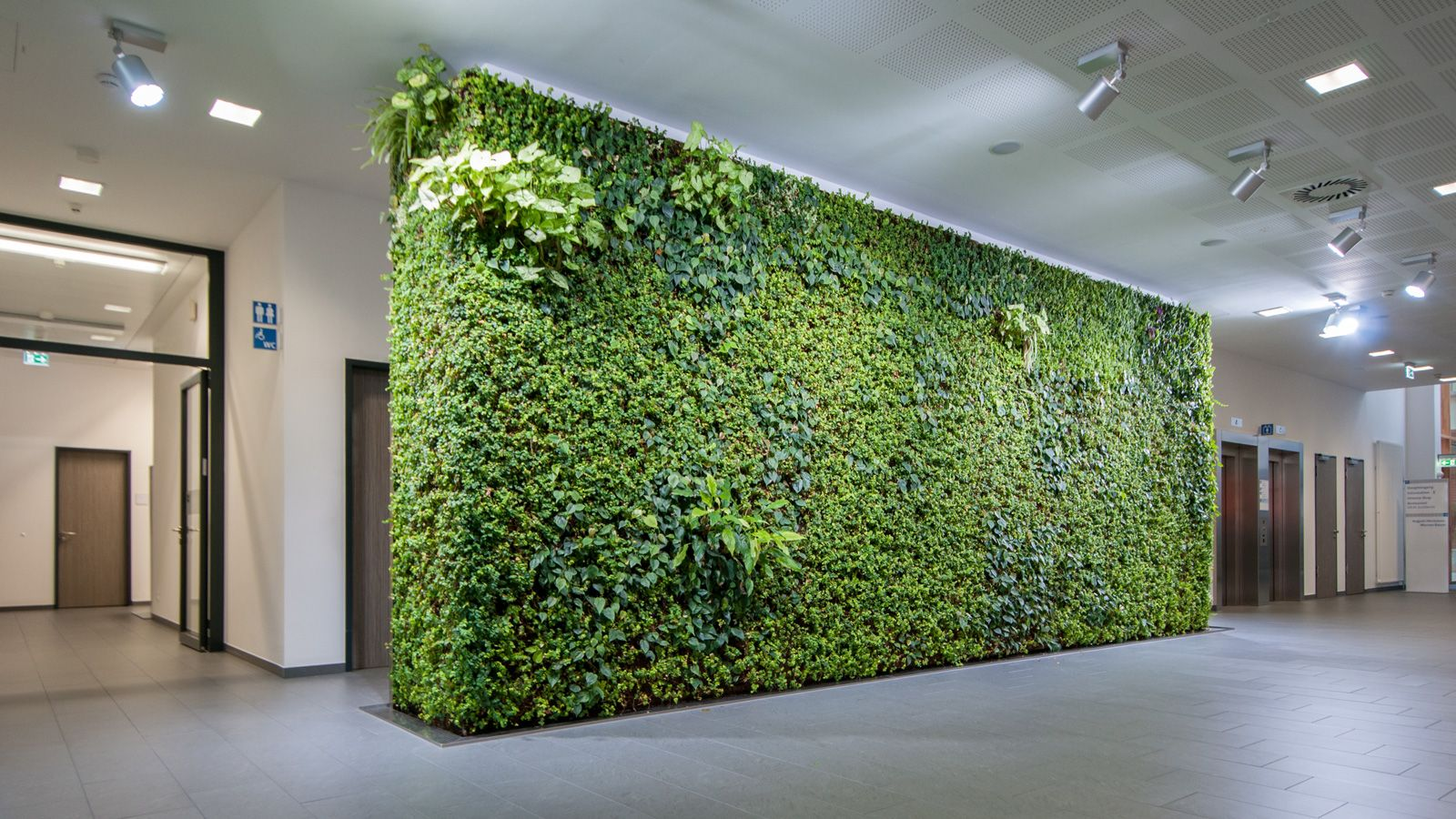 Orthopädische Klinik Markgröningen: Die Grüne Wand ist auch für ...