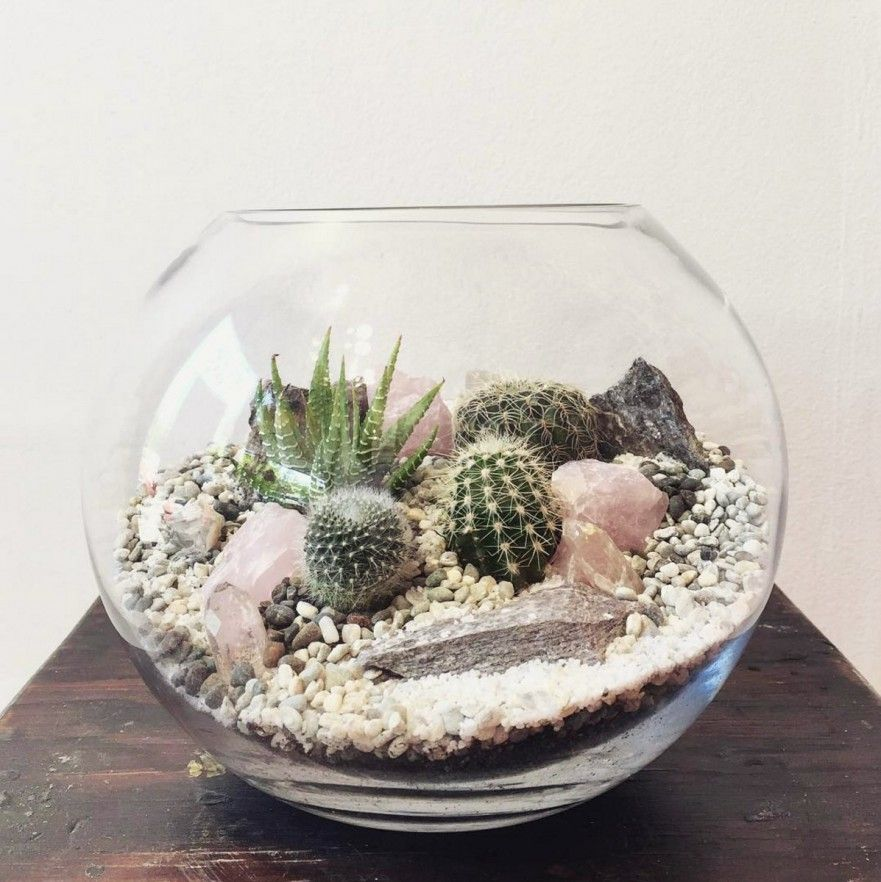 The bioattic crystal desert world terrarium is a miniature landscape of crystals unique cacti succulents stone and rock extremely low maintenance and