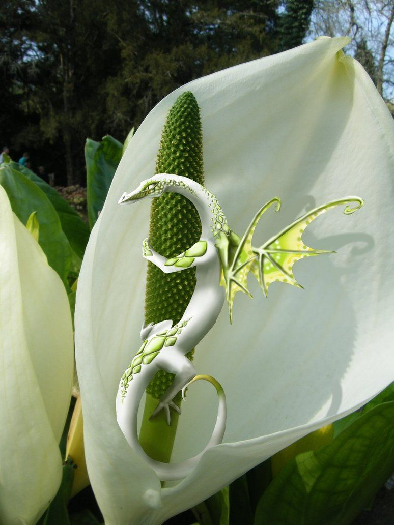 White dragon in flower by laurorag12 on deviantart dragons white dragon in flower by laurorag12 on deviantart mightylinksfo
