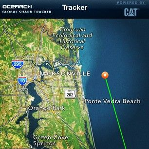 14 ft  2,300 lb  #WhiteShark Katharine pinged in off #Jacksonville