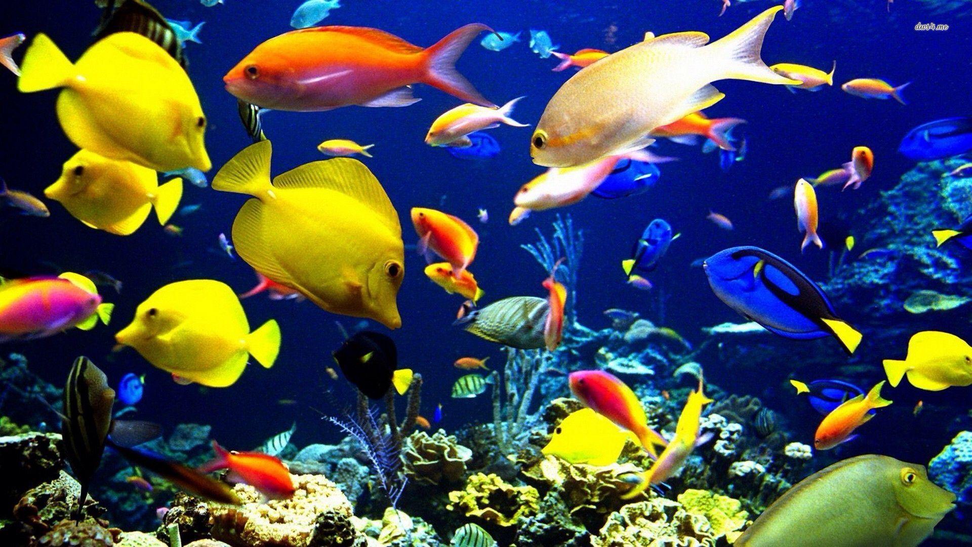 Image From Http Www Funchap Com Wp Content Uploads 2014 07 Tropical Fish Digital Art Wallpaper Jpg Kehidupan Laut Ikan Pemandangan