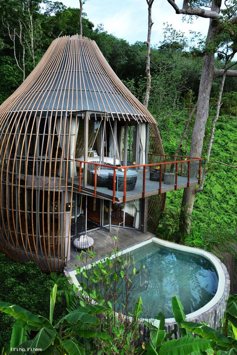 Tree House Pool Villa At If Its Hip Here