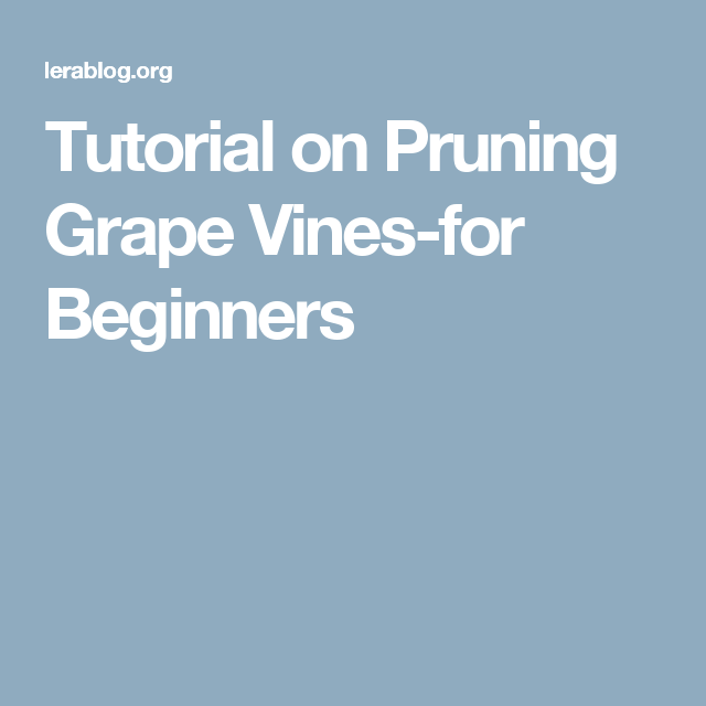 Tutorial on Pruning Grape Vines-for Beginners