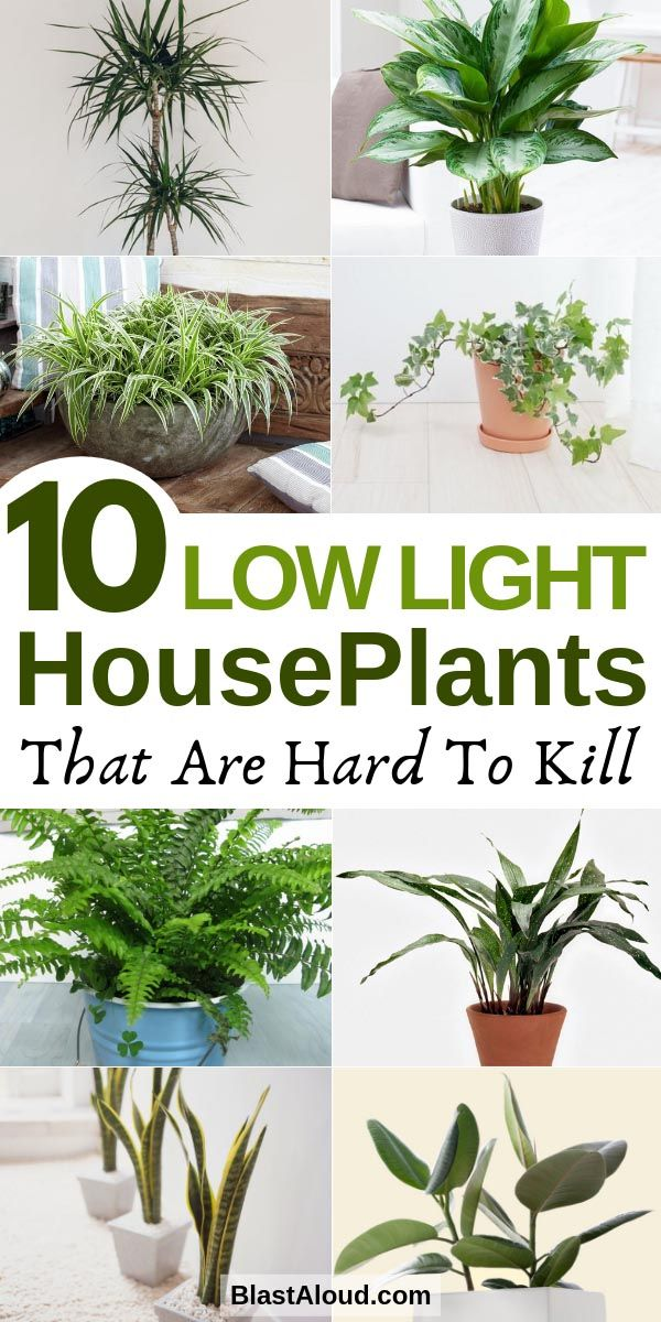 10 Low Light Houseplants You Won't Be Able To Kill
