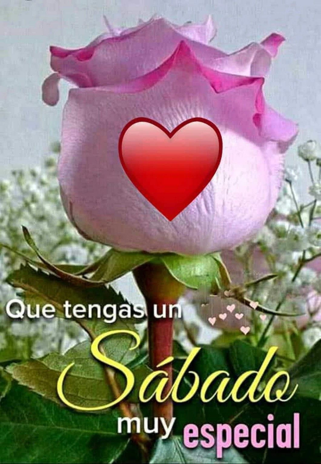 Feliz Sabado Buenos Dias Con Rosas Saludos De Buenos Dias